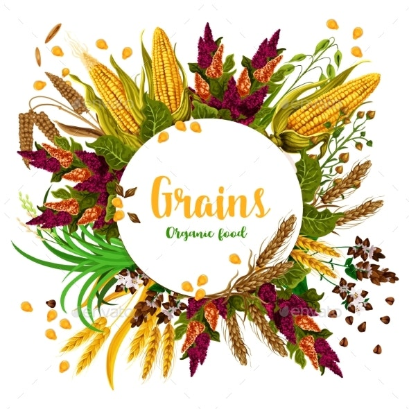 Vector Grains Fresh Organic Food Poster - Food Objects
