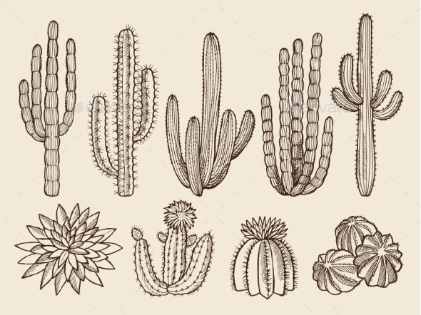 Sketch Hand Drawn Illustrations of Cacti - Organic Objects Objects