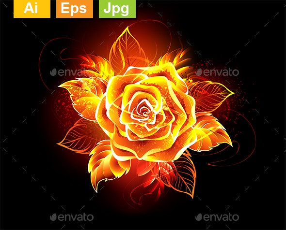 Blooming Fire Rose - Flowers & Plants Nature