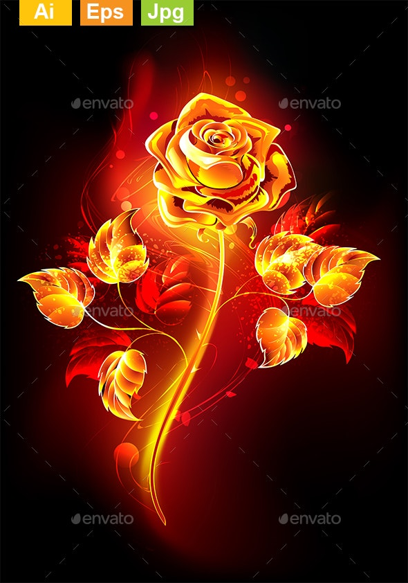 Fire Rose - Flowers & Plants Nature