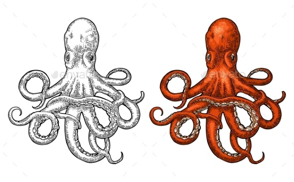 Octopus Sea Monster - Animals Characters