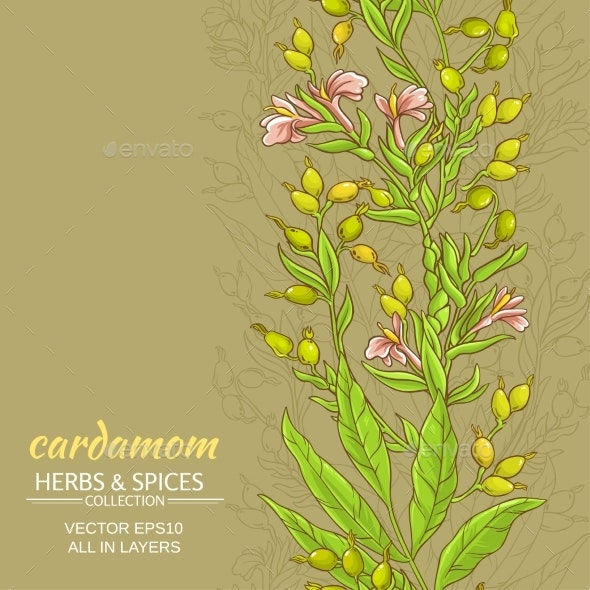 Cardamom Vector Background - Flowers & Plants Nature