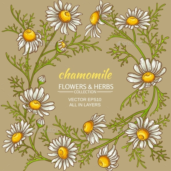 Chamomile Vector Frame - Flowers & Plants Nature