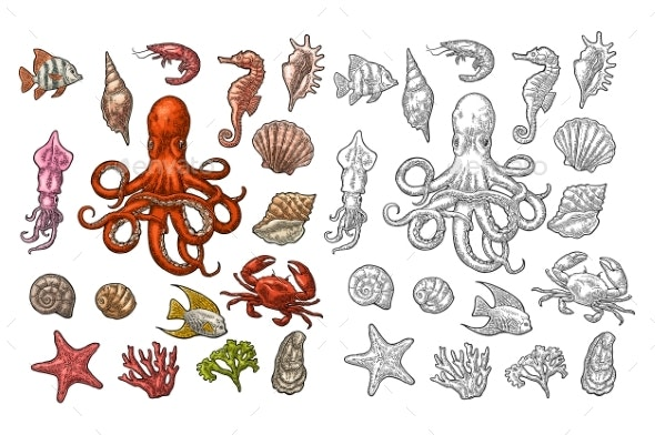 Set of Sea Animals - Animals Characters