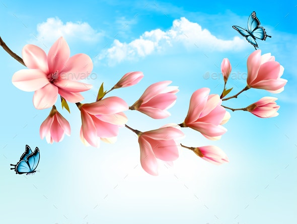 Nature Background with Magnolia Branches - Flowers & Plants Nature
