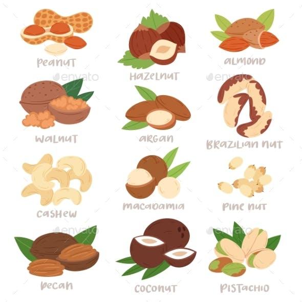 Nut Vector Nutshell of Hazelnut or Walnut