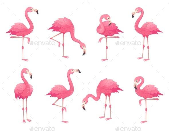 Exotic Pink Flamingos Birds - Animals Characters