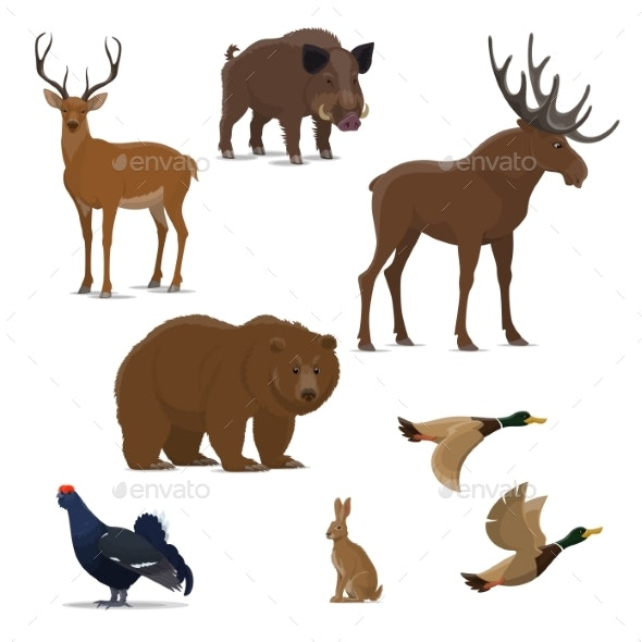 Wild Forest Animals - Sports/Activity Conceptual
