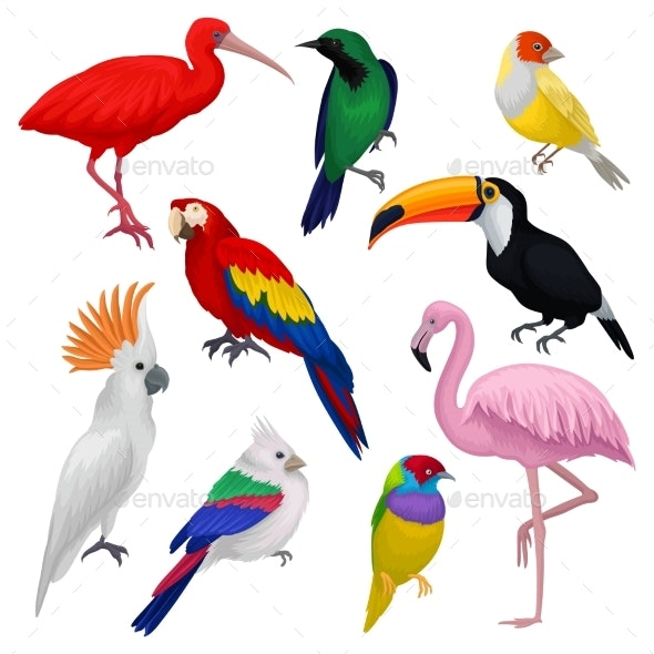 Detailed Vector Set of Various Exotic Birds - Animals Characters