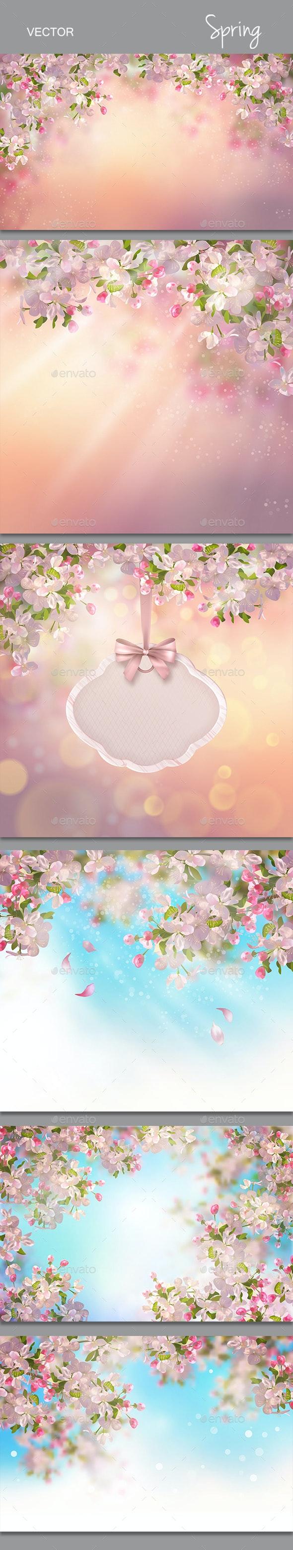 Spring Cherry Blossom - Seasons Nature