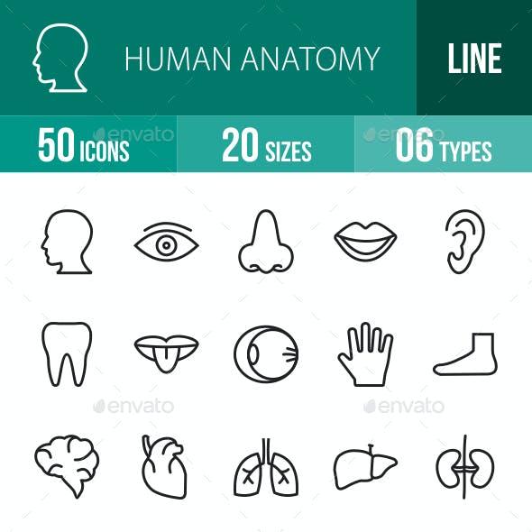 Human Anatomy Line Icons