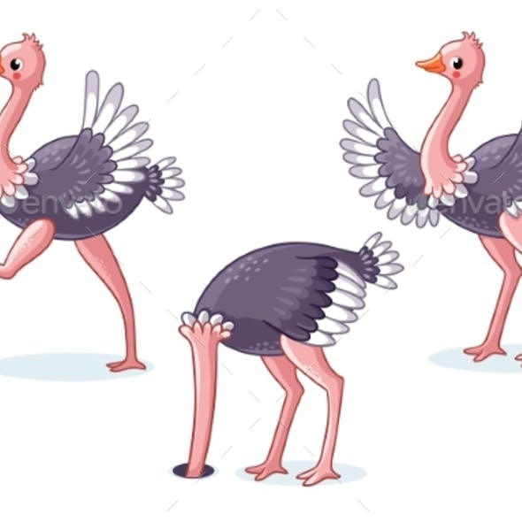Set of Ostriches in Different Poses