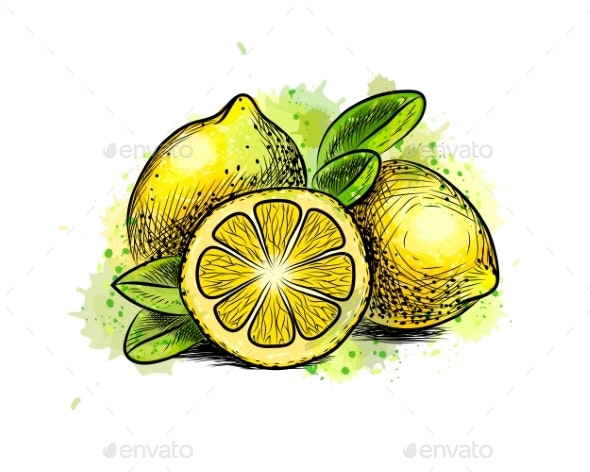 Lemon with Leaves From a Splash of Watercolor - Food Objects