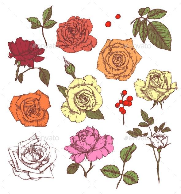 Set of Floral Elements - Flowers & Plants Nature