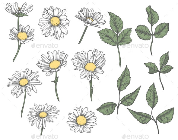 Set of hand-drawn  floral elements in sketch style - Flowers & Plants Nature