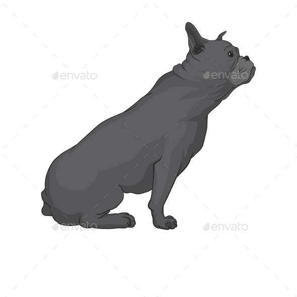 Vector Cartoon Character A Pug Dog And Speech BubbleVector Cartoon Character  Cute Boston Terrier Dog Poses Stock Vector - Illustration of funny, howl:  124557550