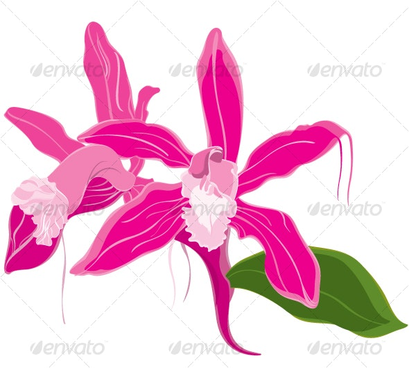 Beautiful orchid in soft pink shade - Flowers & Plants Nature
