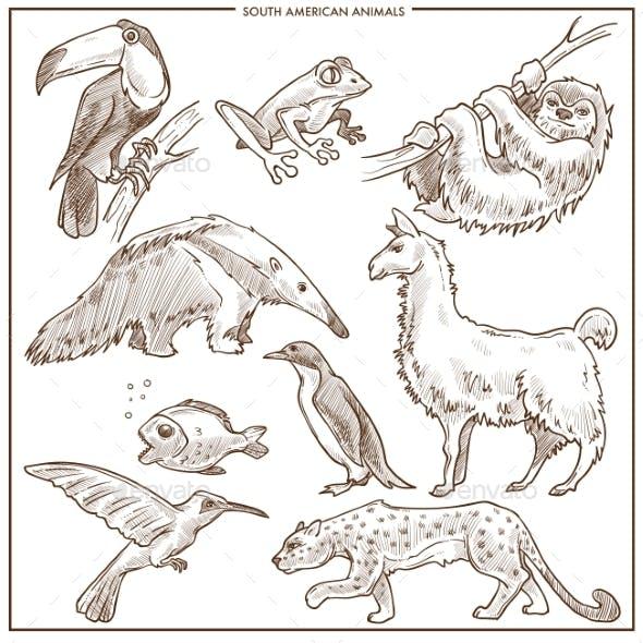 South American Animals and Birds Vector Sketch