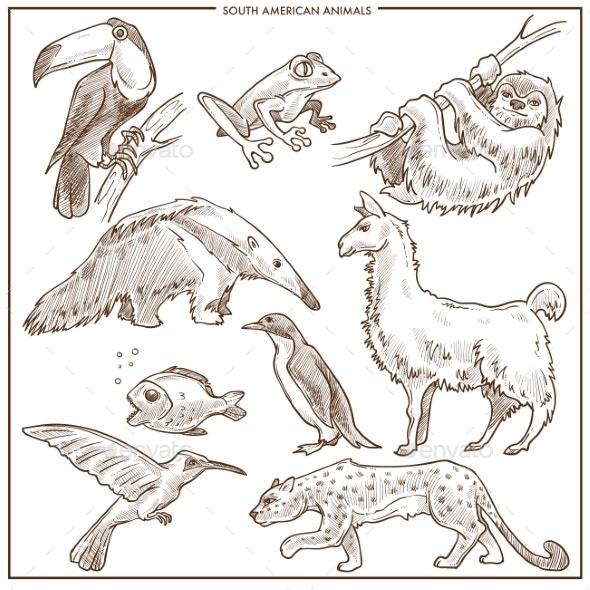 South American Animals and Birds Vector Sketch - Animals Characters