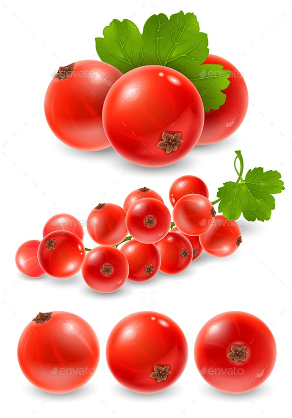 Red Currant - Food Objects