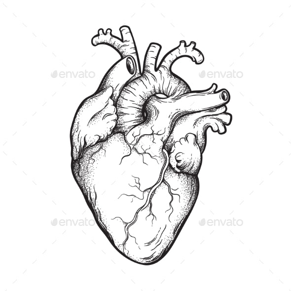 Human Heart Line Art and Dotwork - Health/Medicine Conceptual