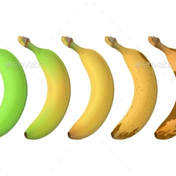 Banana Fruit Ripeness Levels