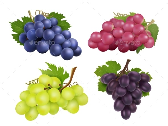 Realistic Grapes. Vector Set of Various Grape - Food Objects
