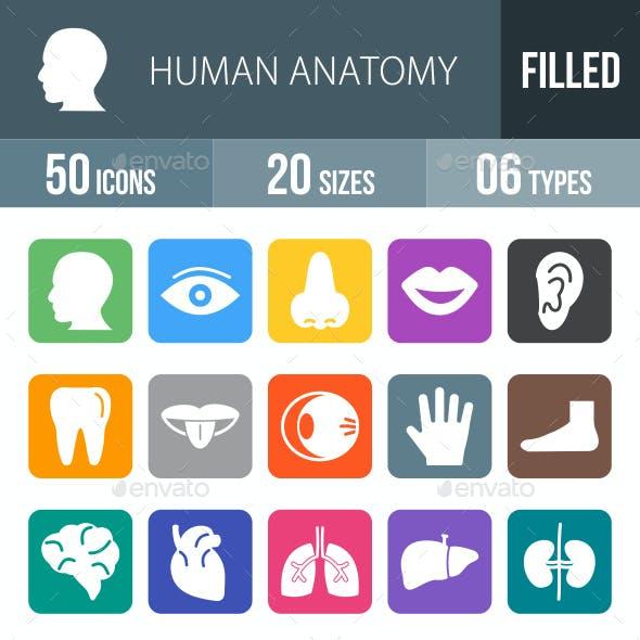 Human Anatomy Flat Round Corner Icons