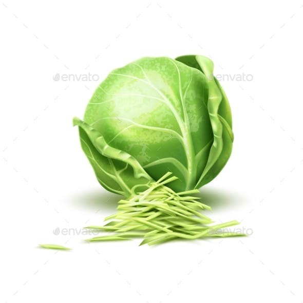 Vector Realistic Cabbage Vegetable