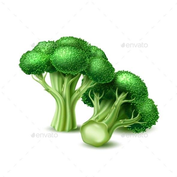 Vector Realistic Broccoli Cabbage Vegetable