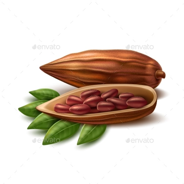 Vector Realistic Cocoa Beans - Food Objects