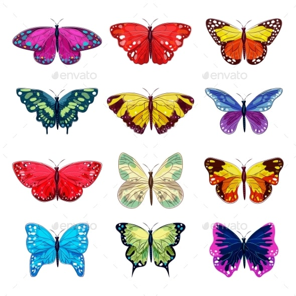 Butterfly Vector Colorful Insect Flying - Animals Characters
