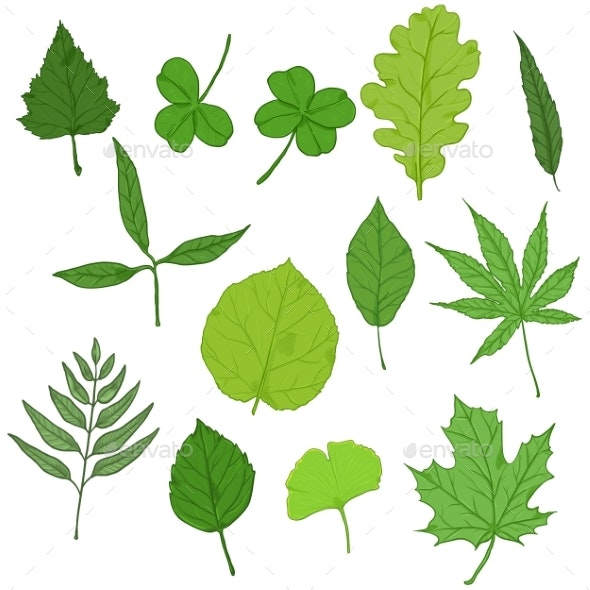 Vector Set of Cartoon Green Tree Leaves - Flowers & Plants Nature