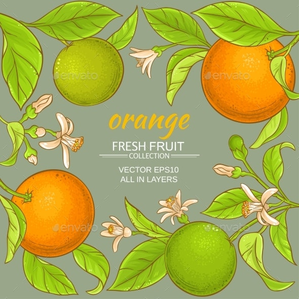 Orange Vector Frame - Food Objects