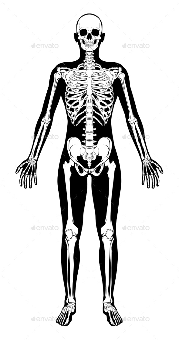 Human Skeleton Figure Medical Silhouette - Health/Medicine Conceptual