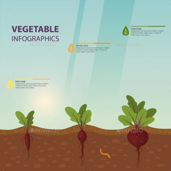 Infographic or Infochart of Beet or Beta Vulgaris - Food Objects