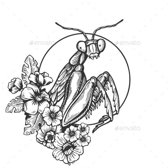 Cartoon And Mantis Graphics Designs Templates