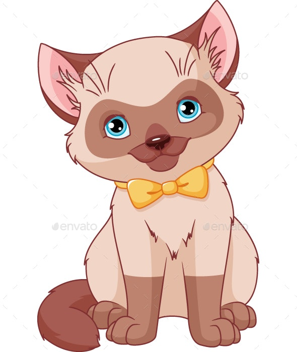 Siamese Kitten - Animals Characters