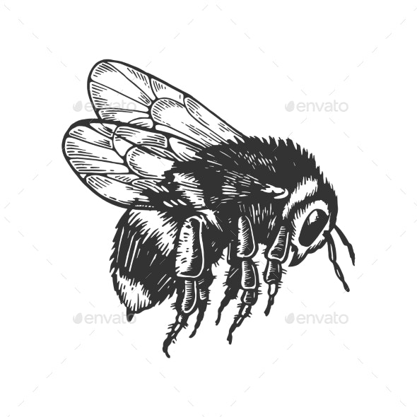 Bumblebee Insect Animal Engraving Vector - Miscellaneous Vectors