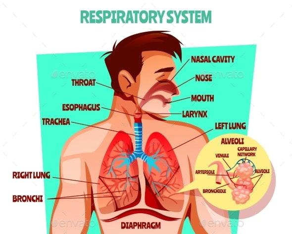 Human Respiratory System Vector Illustration - Health/Medicine Conceptual