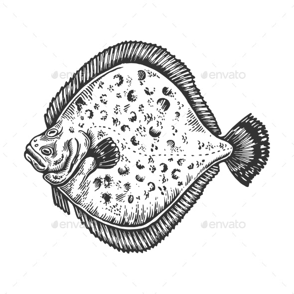 European Plaice Flounder Fish Engraving Vector - Animals Characters