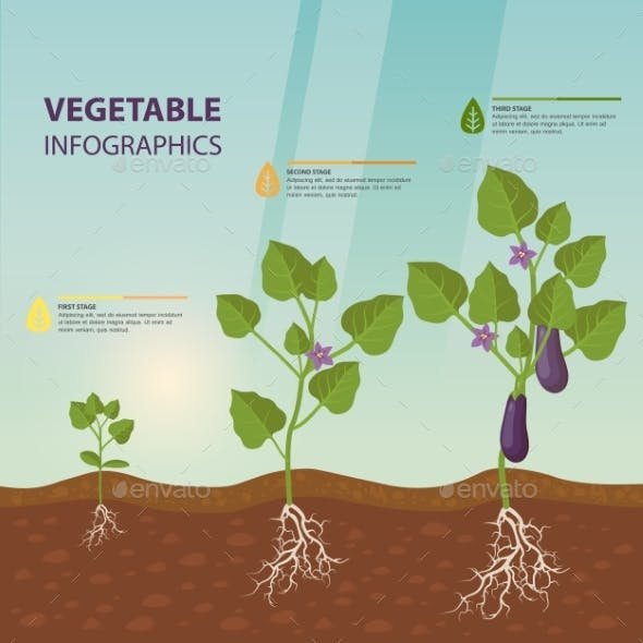 Eggplant Infographic