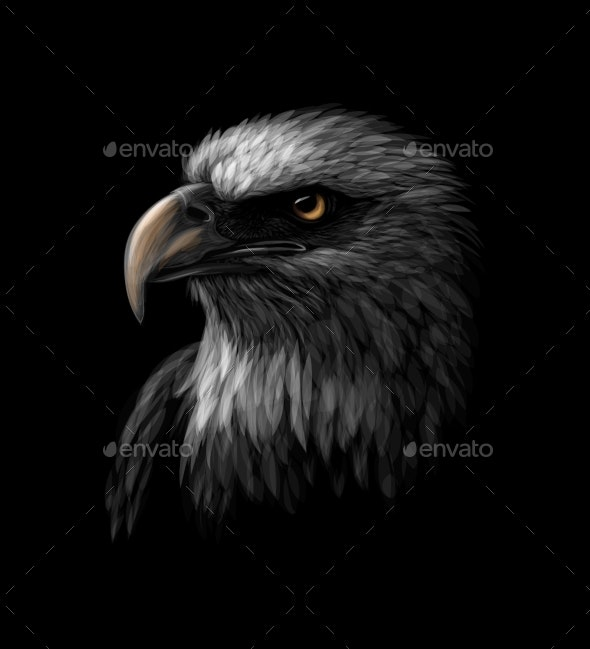 Portrait of a Bald Eagle on Black - Animals Characters