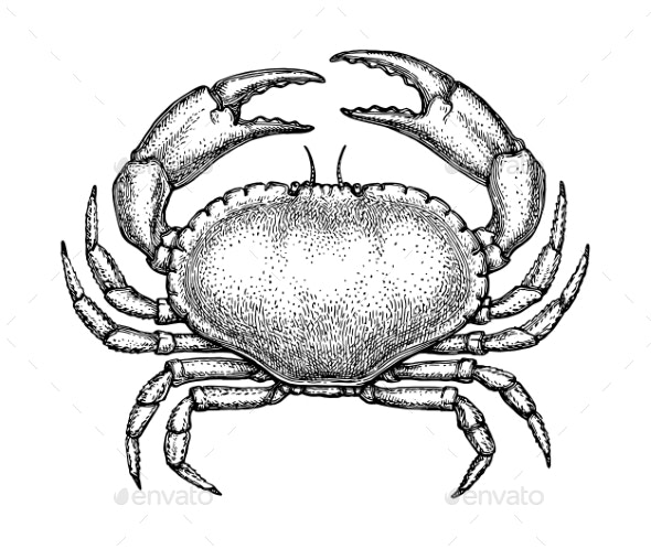 Ink Sketch of Crab - Food Objects