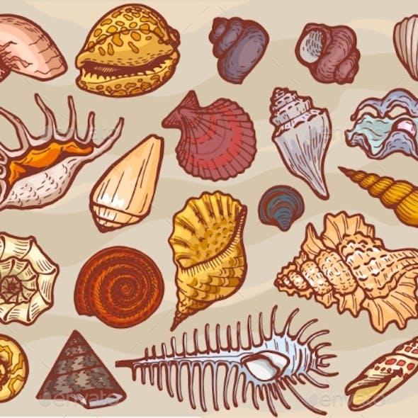 Shells Vector Marine Seashell and Ocean Cockle