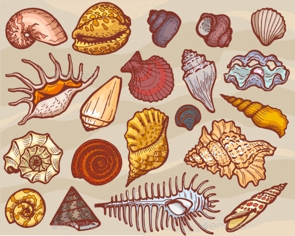 Shells Vector Marine Seashell and Ocean Cockle - Animals Characters