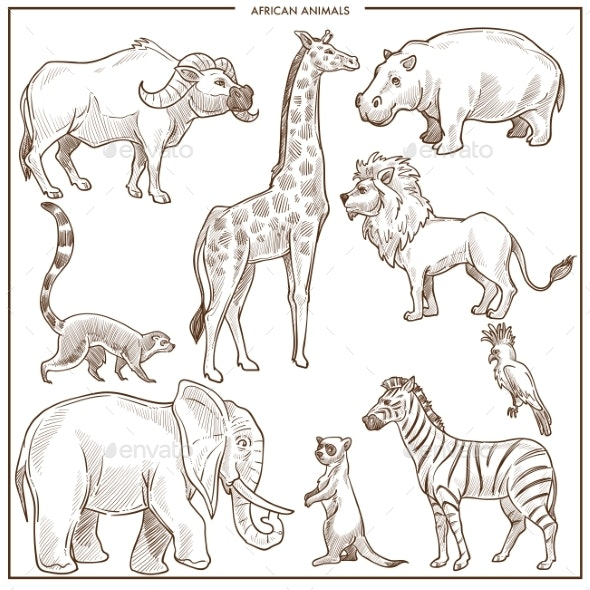African Animals and Birds Sketch - Animals Characters