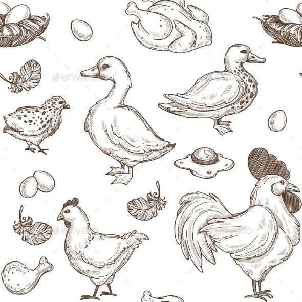 Chicken and Ducks Vector Sketch Pattern Background