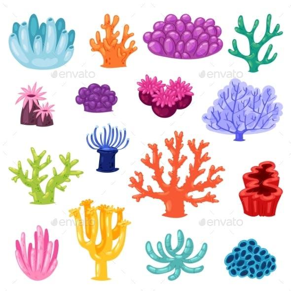 Coral Vectors