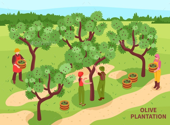 Olives Harvesting Isometric Poster - People Characters